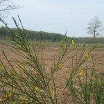 Heideveld in ontwikkeling